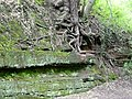 Rock and roots by the canal at Tyrley, Shropshire - geograph.org.uk - 1591108.jpg