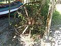 Roda de carrinho de canhão encontrada na ilha - panoramio.jpg