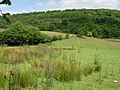 Rough grazing - geograph.org.uk - 205152.jpg