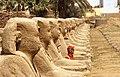 Row of Sphinxes (40503581161).jpg