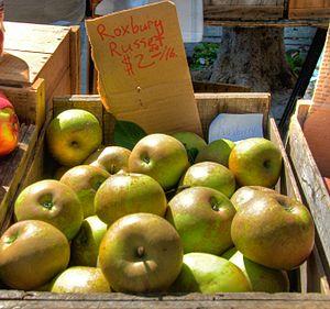 Roxbury Russet - 'Roxbury Russet' apples at a market