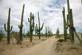 Rural Arizona near Florence, Arizona LCCN2010630174.tif
