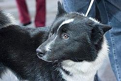 lokal svart doggy stil nära Västerås