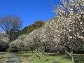 Saitama Omiya Park Plum Grove 1.JPG