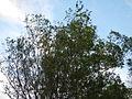 SanNicolas,Batangasjf2252 12.JPG