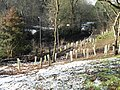Saplings on St Catherine's Hill - geograph.org.uk - 1631519.jpg