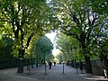 Schönbrunn Garten - Allee 1.jpg