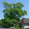 Schleswig-Holstein, Wrist, Naturdenkmal NIK 7727.JPG