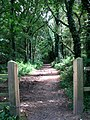 Section of Weavers' Way - geograph.org.uk - 523322.jpg