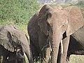 Serengeti 19 (14514013319).jpg