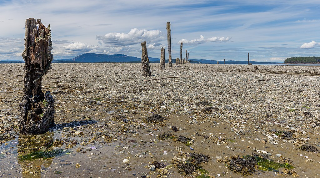 Sidney Spit, Sidney Island, British Columbia, Canada 23.jpg