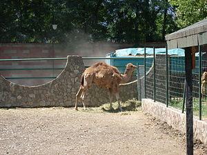 Skopje Zoo - Image: Skopje Zoo 4