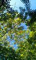 Sky & tree.jpg