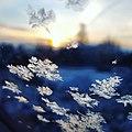 Snowflakes unsplash.jpg