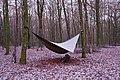 Snowy hammock in Étalle (DSCF6709).jpg