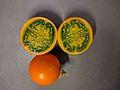 SolanumQuitoenseFruit2.jpg