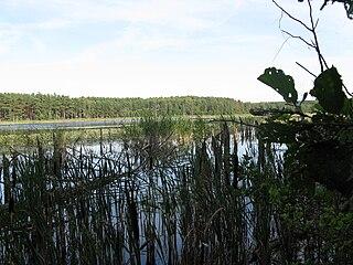 Speck — Mühlensee
