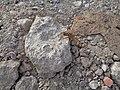 Spider in Wieniec.jpg