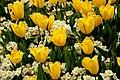 Spring in London (7113801905).jpg