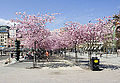 Spring in the city - Stockholm, Sweden - panoramio.jpg