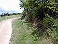 Starr-020620-0094-Coccinia grandis-infested area-Kapalua-Maui (24254466190).jpg