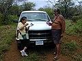 Starr-030409-0040-Cenchrus ciliaris-fence blessing-Puu o Kali-Maui (24262515679).jpg