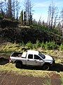 Starr-101201-9620-Sequoia sempervirens-habit post fire with State trucks-Polipoli-Maui (24689726729).jpg