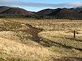 Starr-110811-8013-Holcus lanatus-habitat with Raina recording nene-Kapalaoa Cabin HNP-Maui (25103189345).jpg