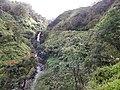 Starr-140222-0460-Fraxinus uhdei-habitat view waterfall and bridge-Hana Hwy-Maui (24873210499).jpg