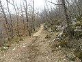 Staza - panoramio (1).jpg