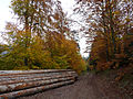 Steige-Forêt d'automne (3).jpg