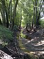 Stevens Creek Tributary A in Macon County, IL.jpg