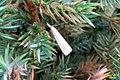 Straw grass-veneer (NH) (7821992912).jpg