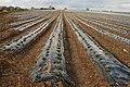 Strawberry Fields Forever - geograph.org.uk - 761342.jpg