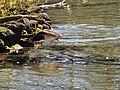 Sulphur Springs Conservation Area (43759441025).jpg