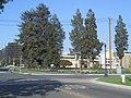 Sunnyvale redwoods.jpg