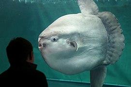 Sunshine international aquarium, Tokyo, Japan (281209602).jpg