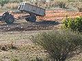 Superproducción de naranjas.JPG