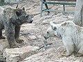Syrian brown bears 02.jpg