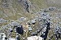 Table Mountain Cape Town 054.jpg