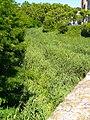 Tafalla - Río Cidacos 2.jpg