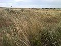 Tall grass prairie at Cimarron National Grassland (6b337e2b8b59440e9cc3c9268053fe73).JPG