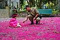 Tapete de Flores do Jambo centenário nos Jardim do casarão português de 1872, Niterói, 2015 PorAlessandraSantAnna.jpg