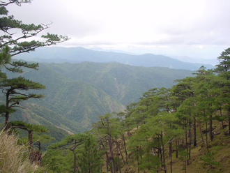 Mount Tapulao - Pine forest of Mount Tapulao