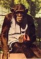 Taronga Park Zoo (27018988101).jpg