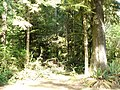 Temperate rainforest at Rockport State Park WA.jpg