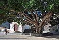 Tenerife Plaza de Masca R01.jpg