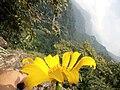 Terlenanya bunga oleh keindahan alam.jpg