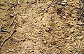 Terroir argileux VDP de Carcassonne.jpg