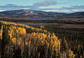 Tetlin Refuge Autumn Landscape.jpg